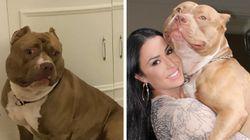 Está na hora de admitir que o cachorro da Gracyanne Barbosa é a personalidade de