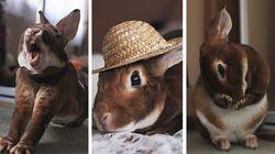 Você nunca vai ser tão fotogênico quanto este coelho chamado