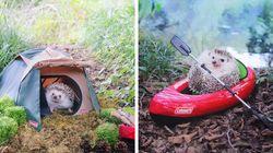 Este ouriço aventureiro e seu kit de acampamento é a melhor coisa que você vai ver