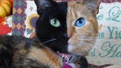 A gatinha de 'duas caras' que prova que ser diferente é a coisa mais linda do