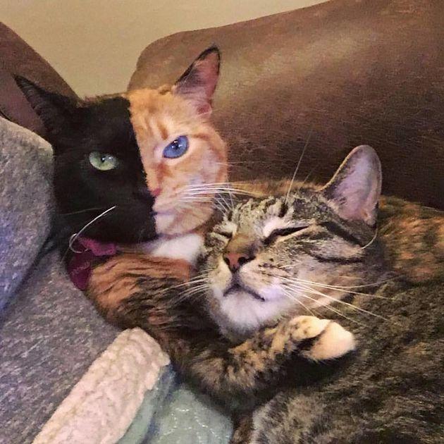 Esta gatinha de 'duas caras' é a prova de que ser diferente é a coisa mais linda do