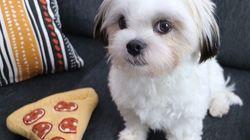 O curioso caso do cachorrinho que trocou seu melhor amigo por um pedaço de