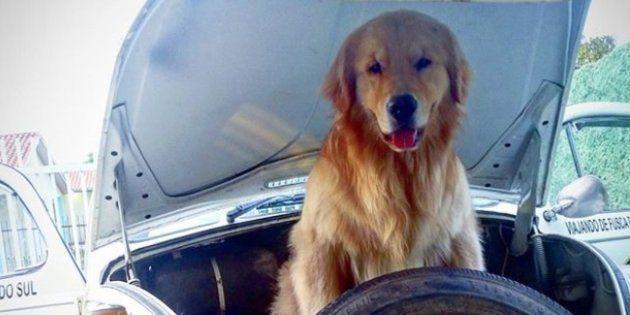 Shurastey viajou mais de 20 mil km de fusca com seu dono em busca de