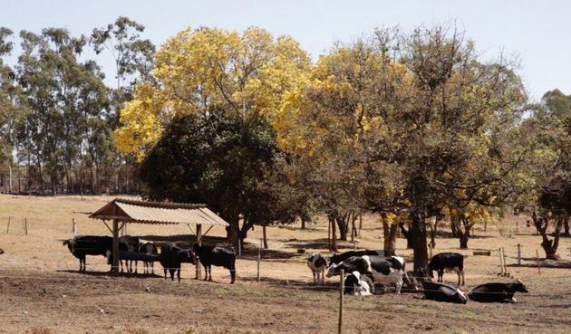 Fazenda de leite em Carmo do