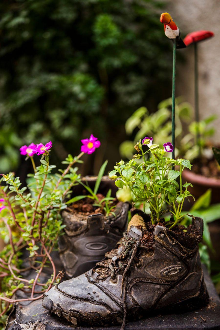 No quintal de casa, Nivia cultivou flores em um dos tênis preferidos de