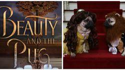 'A Bela e o Pug' é a versão do conto de fadas que a Disney deveria levar pro