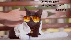 Campanha com Lucky, o gato sortudo, busca aumentar adoção de gatinhos