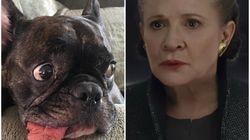 Você vai se emocionar com o doguinho de Carrie Fisher assistindo ao trailer de 'Star