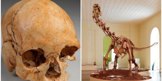 Réplica de Titanossauro e Luzia são apresentados em detalhes no passeio virtual no Museu