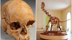 Agora é possível fazer um tour virtual pelo Museu Nacional