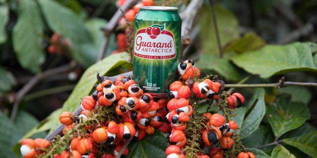 Antes de chegar às prateleiras dos supermercados, o Guaraná Antarctica passa por diversas etapas de produção.