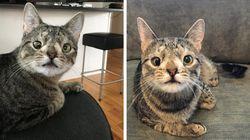 Esta gatínea é a nova embaixadora dos animais. O motivo? Muito vesguínea e muito