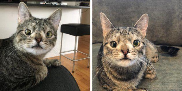 Esta gatínea é a nova embaixadora dos