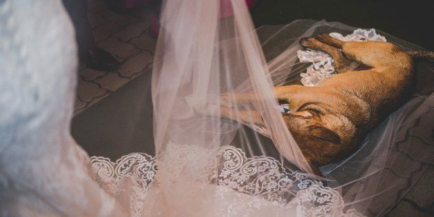 O vira-latinha invadiu um casamento causando apreensão em todos os