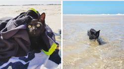 Este gatíneo tomando banho de mar é a melhor definição de