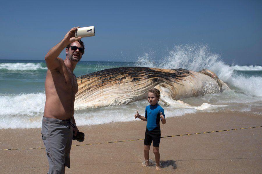 Baleia encontrada morta em Ipanema buscava costa do Brasil para