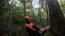 Madeireira acusada de massacre no Mato Grosso vendeu madeira para EUA e União