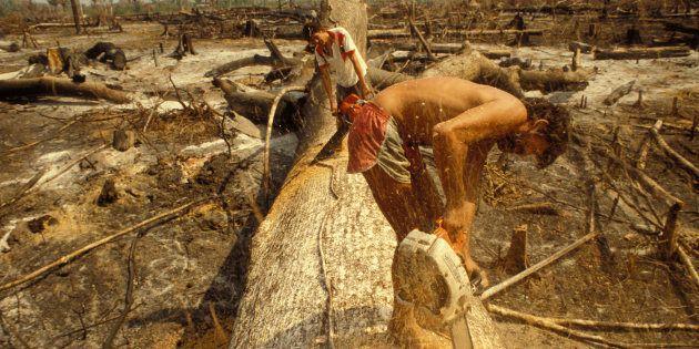 Trabalhadores na floresta Amazônica, no estado do