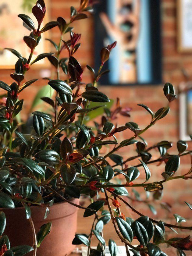 Plantas que não precisam de sol para decorar o seu