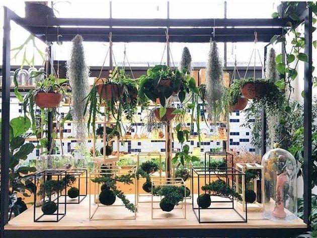Guia com dicas práticas para cuidar de plantas que não precisam de