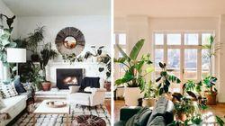 5 perfis no Instagram que vão te deixar louco para ter plantas em