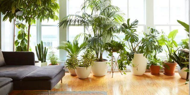 Espada-de-São-Jorge, Pata de Elefante e Costela de Adão são plantas perfeitas para o seu