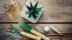 Como diagnosticar e salvar sua planta doente (sim, ela pode