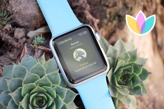 3 aplicativos para amantes de plantas e