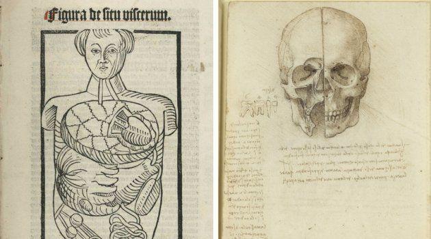Esquema do corpo humando (esquerda), desenho de 1501. Crânio seccionado (direita), desenho de 1489 de Leonardo da Vinci.