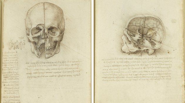 O crânio seccionado, Leonardo da Vinci