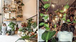 9 lugares para comprar plantas em SP que realmente valem um