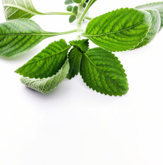 5 plantas e ervas perfeitas para infusões e compressas que você pode ter em