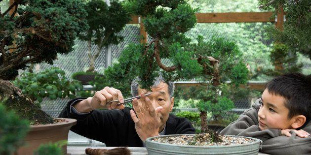 O objetivo do bonsai é criar uma representação realistada natureza na forma de uma árvore em