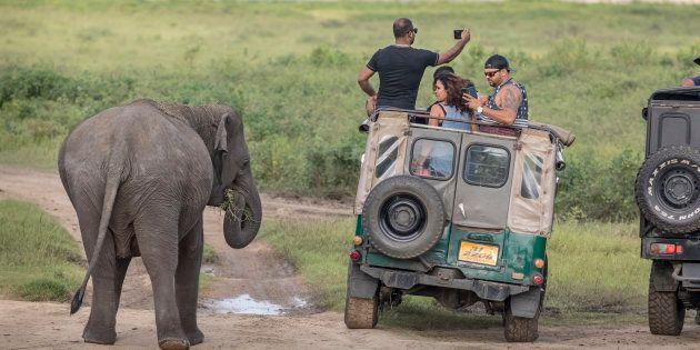 A TripAdvisor, plataforma de turismo, aumentou as restrições para a venda de ingressos de atividades que envolvem animais.