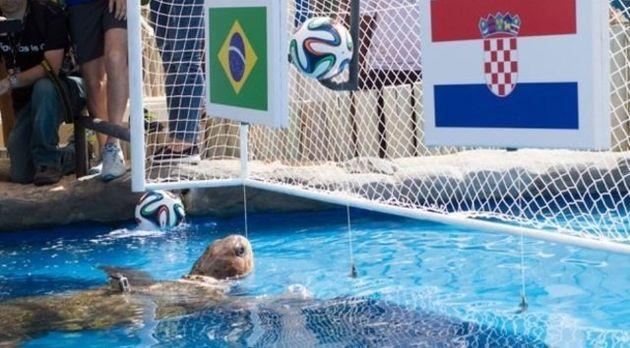 Tartaruga Cabeção cravou vitória do Brasil sobre a Croácia na abertura da Copa