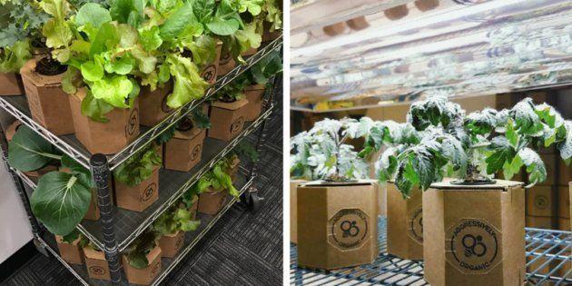 Use embalagens recicláveis para criar hortas em