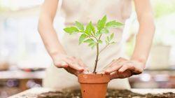 Como trocar a planta de vaso sem