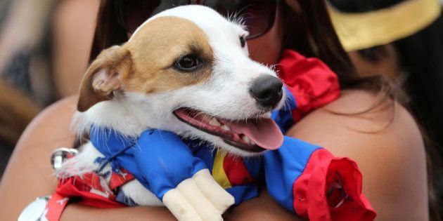 Ministro do STJ ressaltou ainda que não se trata de uma questão de humanizar o animal e que não se pode...