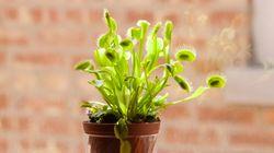 Sem medo: 5 plantas carnívoras para você ter em