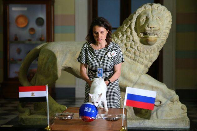Rússia x Egito: Segundo duelo do time da casa e segundo acerto de Achilles a favor dos