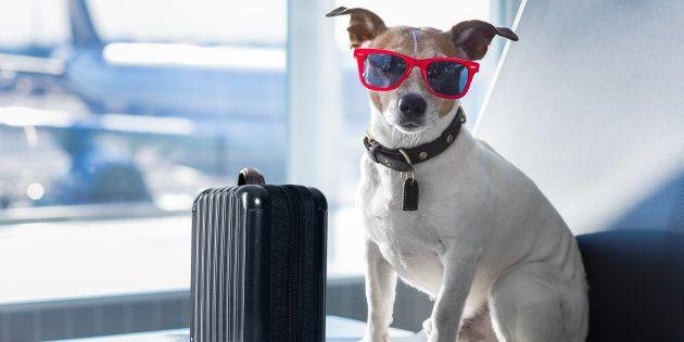 9 cuidados para você viajar com o seu pet em