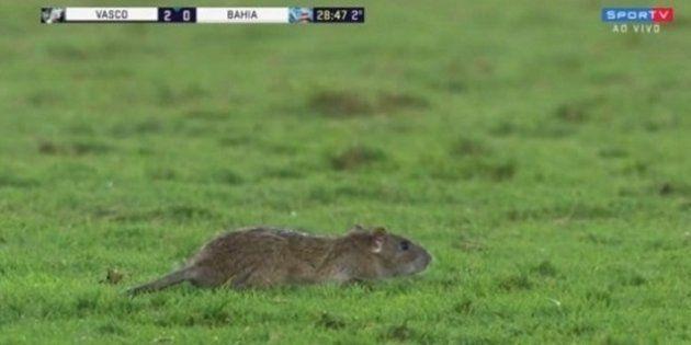 Rato invadiu campo no jogo entre Vasco e Bahia e virou atração na volta da