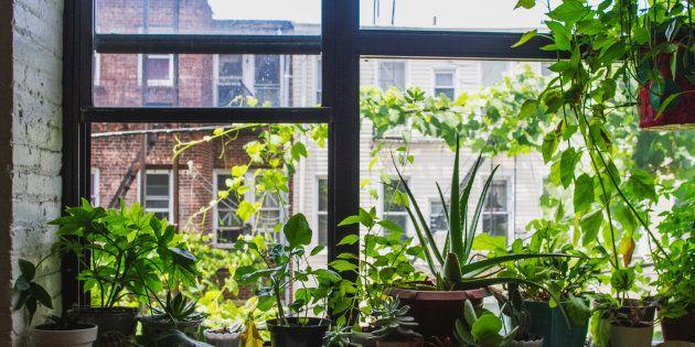 10 plantas que vão melhorar a qualidade do ar na sua