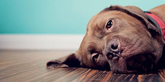 """""""Os animais de estimação podem sentir luto quando morre um humano ou um animal companheiro"""", diz Kate..."""