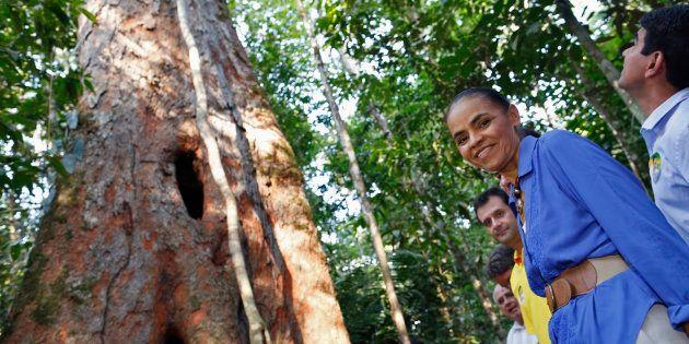 Apenas a indústria de árvores plantadas atual emprega de forma direta e indireta quase 4 milhões de pessoas,...