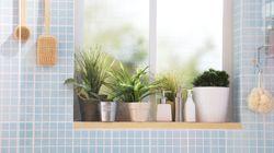 10 ideias de plantas para decorar apartamentos