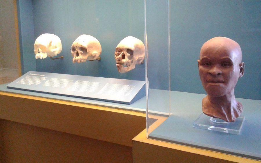Restituição de Luzia, fóssil humano mais antigo encontrado no Brasil, no Museu