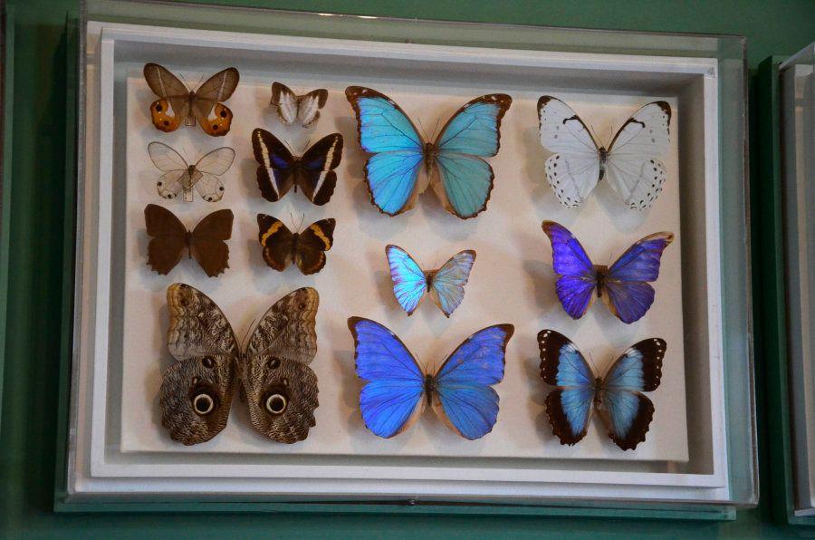 Acervo de zoologia do Museu Nacional reunia peças de diveros