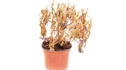 5 motivos pelos quais suas plantas estão ficando