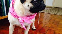 Outubro Rosa: Câncer de mama também atinge